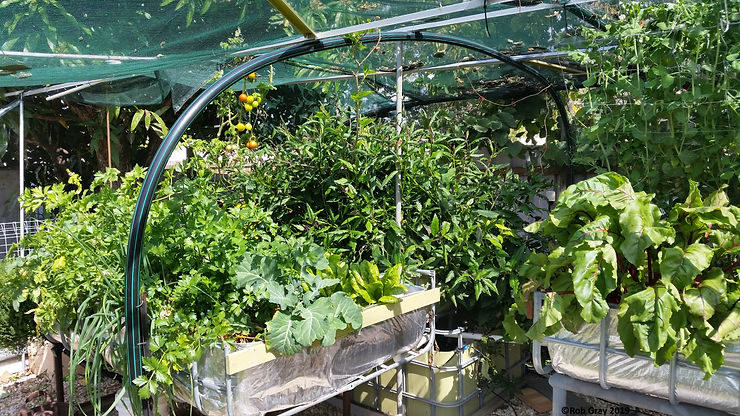 Raised Aquaponic Grow Beds