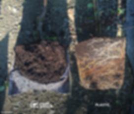 Root Pouch & Plastic pot Comparison