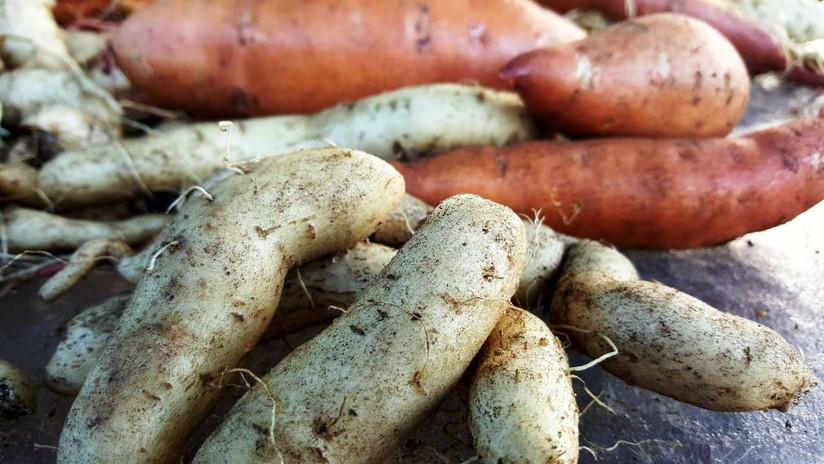 Young Sweet Potatoes