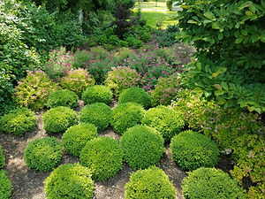 Landscaping shrubs.jpg