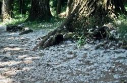 1992-08 Rhône-Alpes, Lac-d'Issarlès