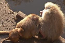 2005-01 Amersfoort Zoo