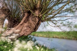 2014-04 Wind-Wilgen en Fluitekruid