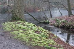 2017-01 Hilverbeek, Spaanderswoud