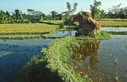 1990-08 Bali