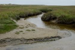 2013-05 Texel slufter+duinen, Den Ho