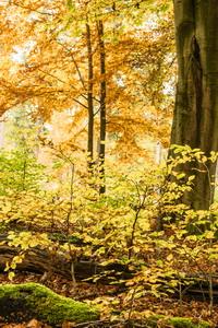 2018-11 Herfst in Planken Wambuis