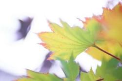 2010-10 Bokeh met Helios 44-4, 58 mm