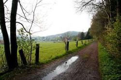 2010-04 Hullhorst, Teutoburgerwald