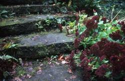 1995-10 Veluwse tuin