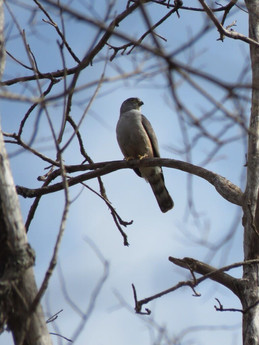 pássaro 2.jpg