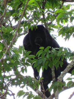 macaco 1.jpg