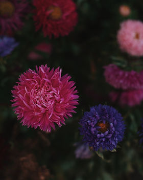 blooming-blossom-blurred-background-1447