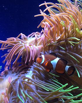 Nemo Found.jpg