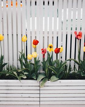 bloom-blossom-fence-701758.jpg