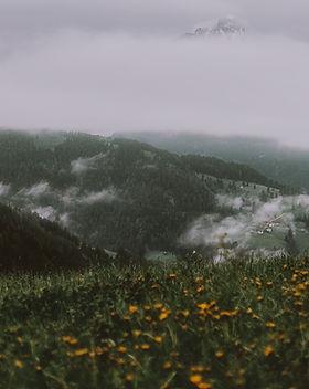 yellow-flower-field-near-mountain-under-
