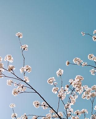 bloom-blooming-blossom-1078565.jpg