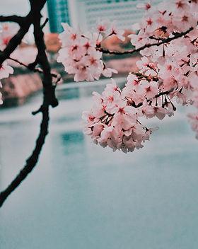 bloom-blossom-branch-1110151.jpg