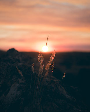 backlit-dawn-nature-1008737.jpg