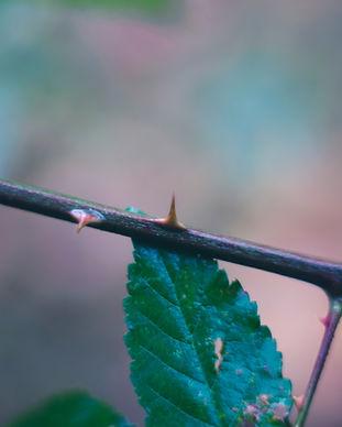 blur-close-up-dangerous-230864.jpg