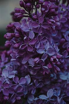 autumn-beautiful-blooming-1381679.jpg