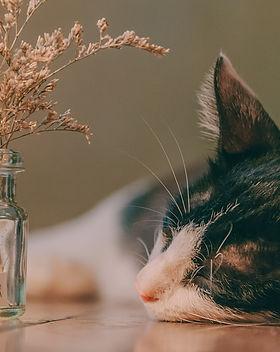 animal-blurred-background-cat-1443710.jp