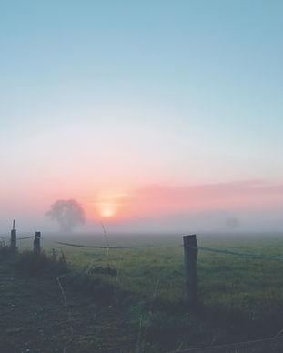 dawn-fence-fog-163323.jpg