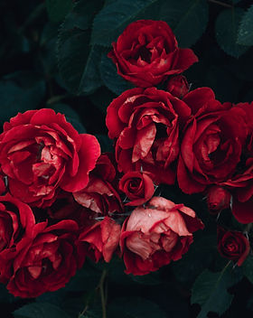 anniversary-beautiful-blooming-1233414.j
