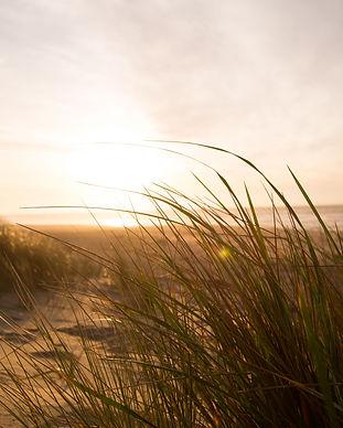 wind-grass-beach-sea-7763.jpg