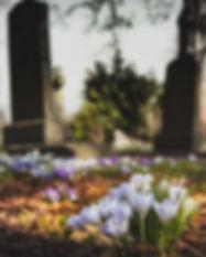 bloom-blossom-cemetery-161280_edited.jpg