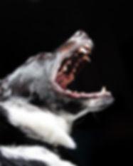 animal-bark-black-wallpaper-2238.jpg