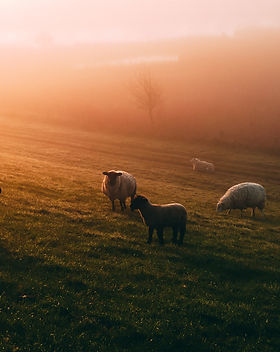 agriculture-animal-animal-photography-22