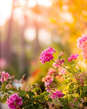 bloom-blossom-floral-17666.jpg
