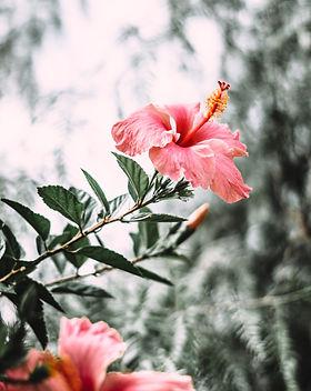beautiful-bloom-blooming-1596569.jpg