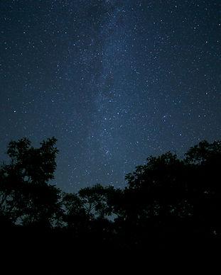 dark-forest-milky-way-8990.jpg