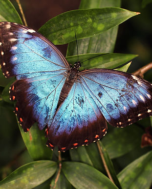 butterfly-insect-invertebrate-89770.jpg