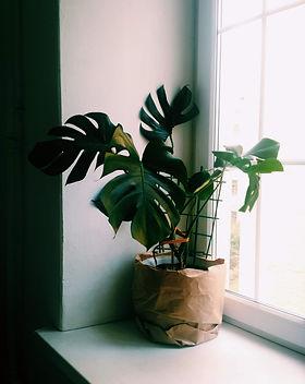 green-plants-beside-window-3139367.jpg