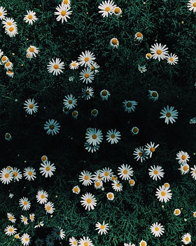 background-bright-close-up-1407325.jpg