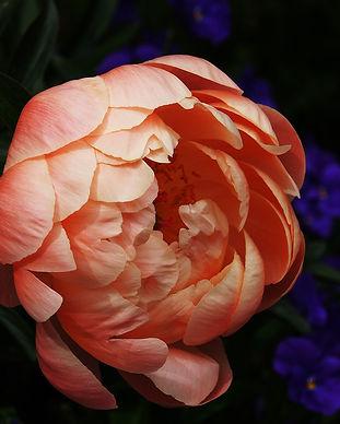 bloom-blossom-flora-235762.jpg