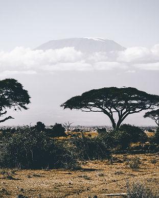 adventure-africa-bush-861339.jpg