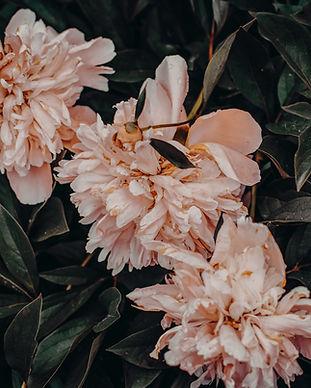 bloom-blossom-flora-1005715.jpg