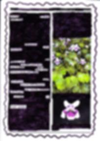 florish viola-visual-jpg_edited.jpg