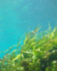 seaweed-1129226_1920.jpg