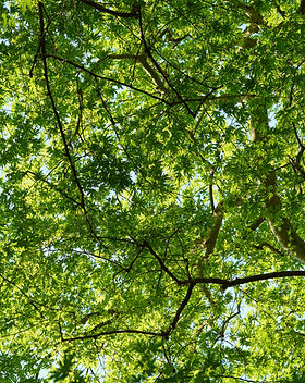 tall-green-trees-2154617.jpg