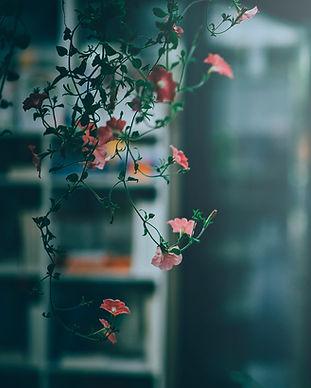 bloom-blossom-flora-775995.jpg