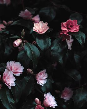 beautiful-blooming-bouquet-1083822.jpg