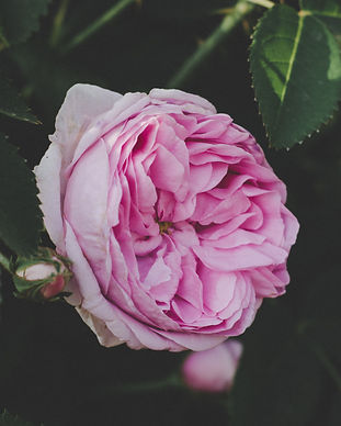 beautiful-bloom-blooming-1292741.jpg