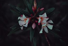 beautiful-bloom-blooming-1222868.jpg