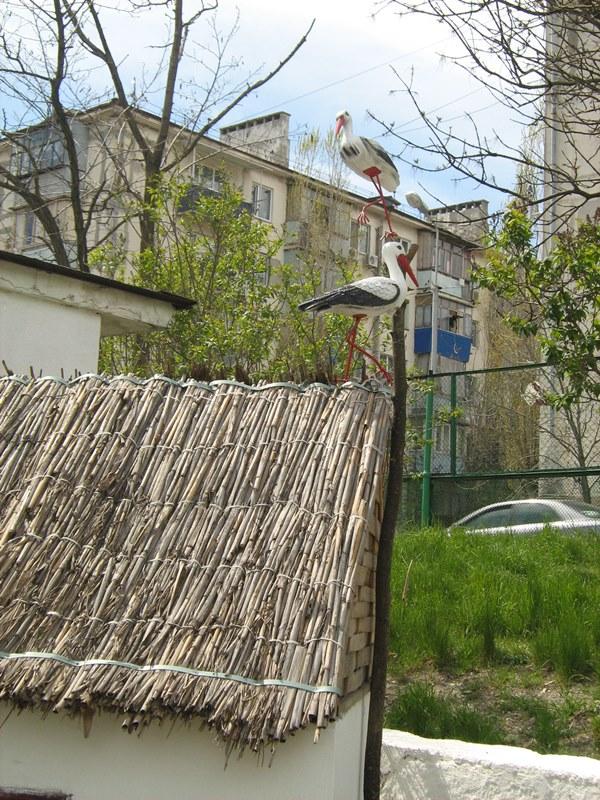 МА ДОУ ЦРР - детский сад № 70 дизайн территории 13