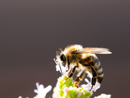 Neues Insektenschutzgesetz und neuer Pflanzenschutz